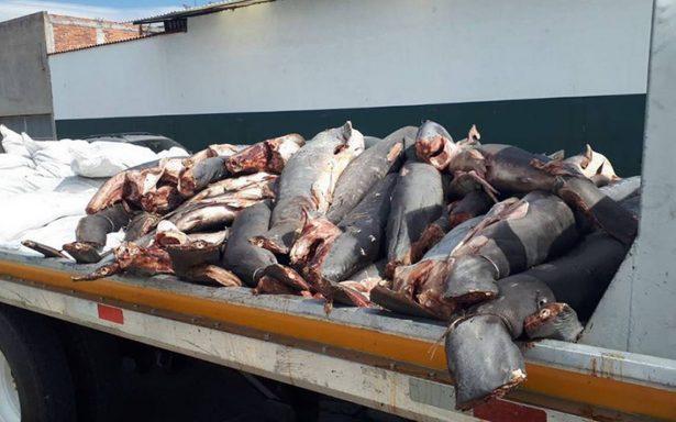 Hallan 300 cadáveres de tiburones en plena carretera de Michoacán