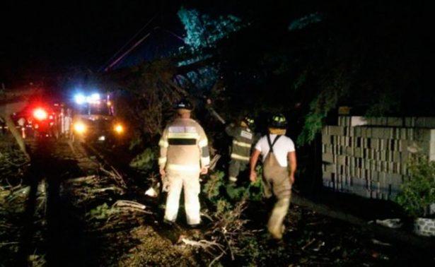 Tromba deja 41 árboles caídos y daños a casas en Toluca