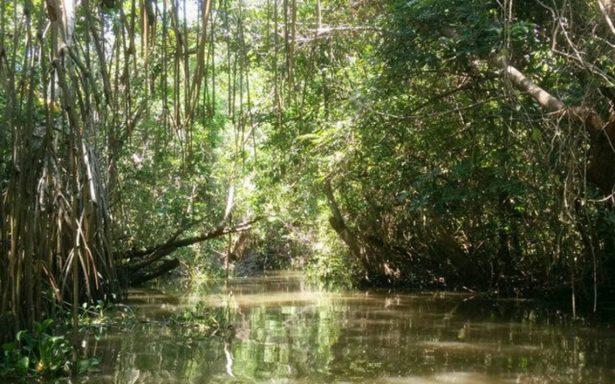 Pantanos de Centla, descubre la Ruta del Agua en Tabasco