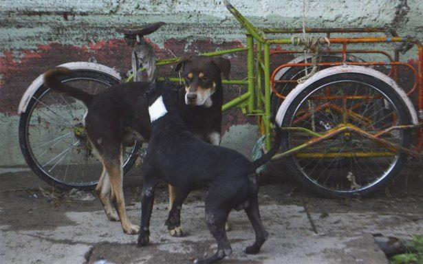 Se agudiza epidemia de garrapata en Torreón