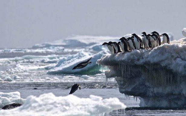 Drones descubren más de 1.5 millones de pingüinos en el océano Antártico