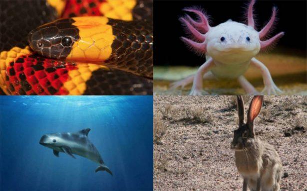 #DíaMundialDeLosAnimales: Las increíbles especies orgullosamente mexicanas