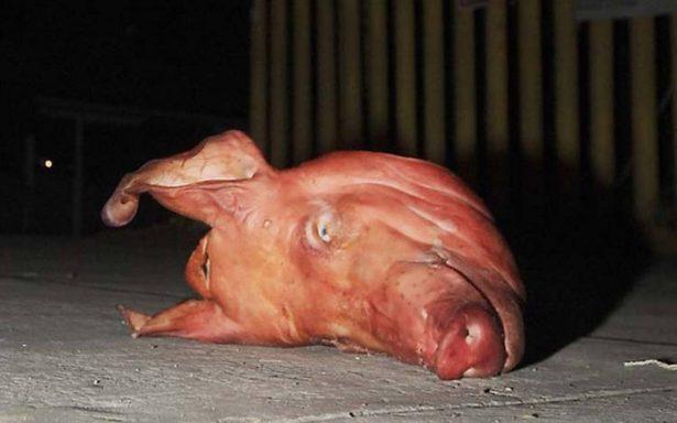 Hallan cabeza de cerdo con mensaje de amenaza en Iztapalapa