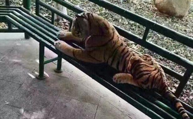 Tigre de juguete llamó la atención  de fuerzas especiales en China