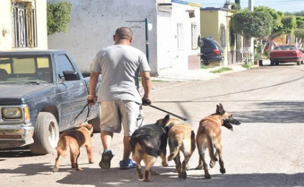 Detectan falsos veterinarios en unidades móviles