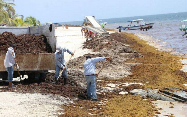 Instalan grupo académico para atender crisis del sargazo en el Caribe