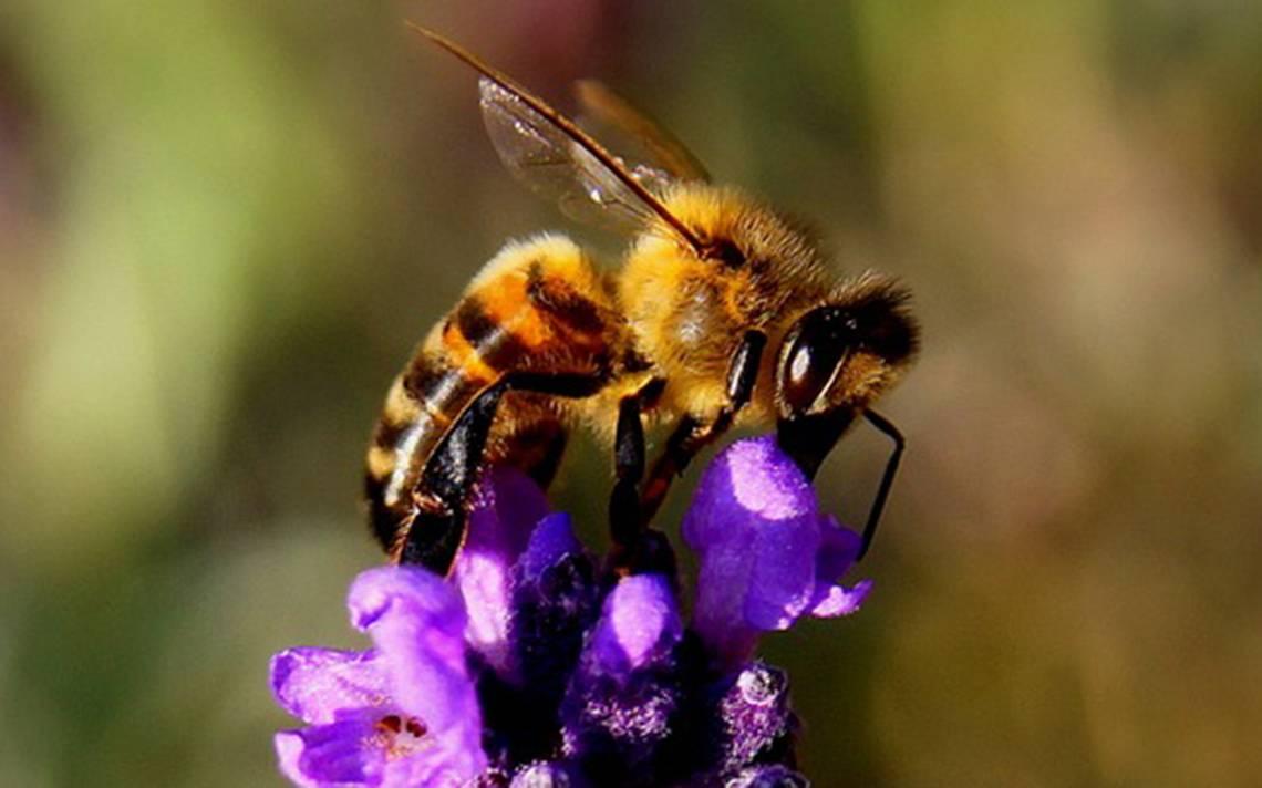 Las abejas como fuente de vida