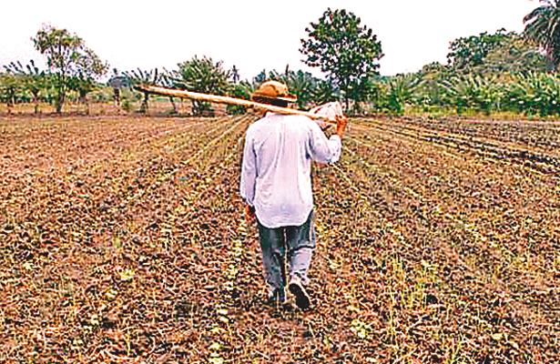 Productores del campo padecen por la sequía