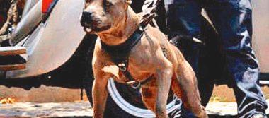 Agresivos tanto perro como dueño; can quiso atacar a mujer, en la Felipe Ángeles