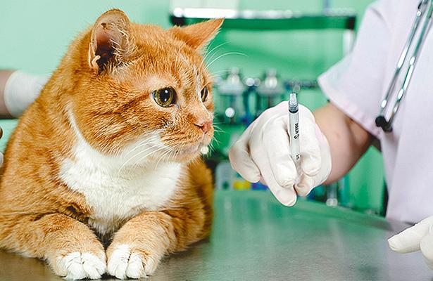 Campaña Nacional de Vacunación Antirrábica Canina y Felina, el 26