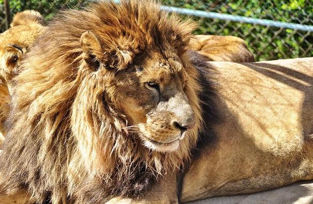 2 días estará cerrado el zoológico municipal