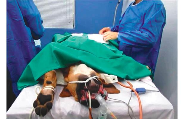 Esterilización de perros y gatos, subió