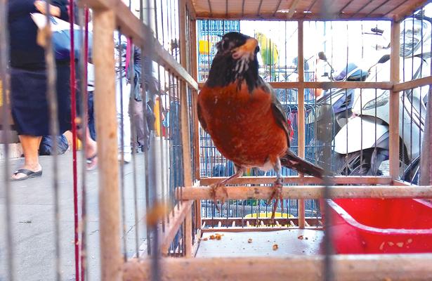 Prohíben venta de 26 especies de aves