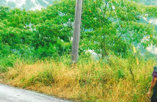 Hierba en calles y orilla de carretera resulta nociva