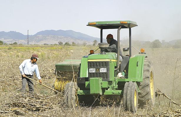 Doce mil hectáreas  son de zona agrícola