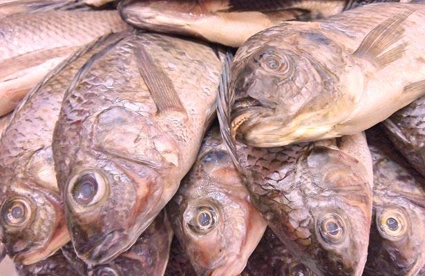 Cuidado al comprar pescados y mariscos