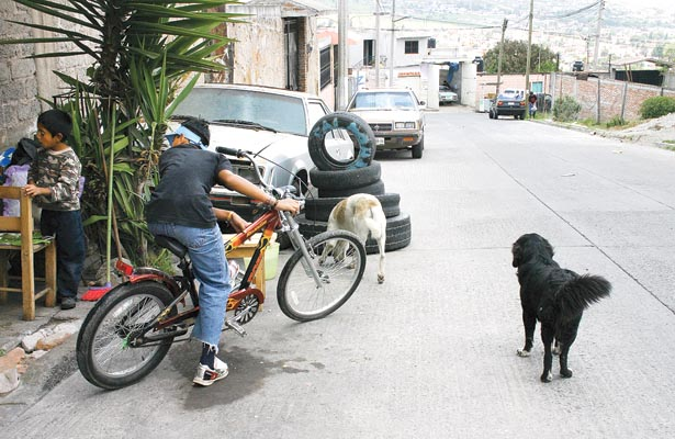 Empadronarán a mascotas; los dueños deben evitar sanciones