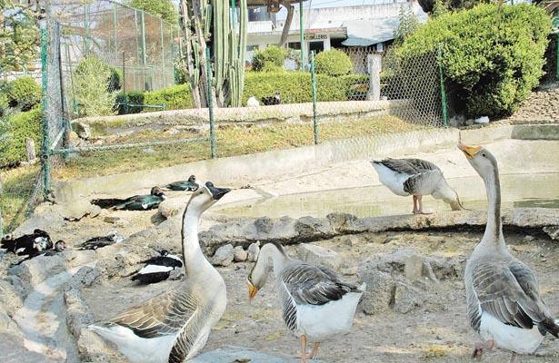 Zoológico: esperan miles de visitantes