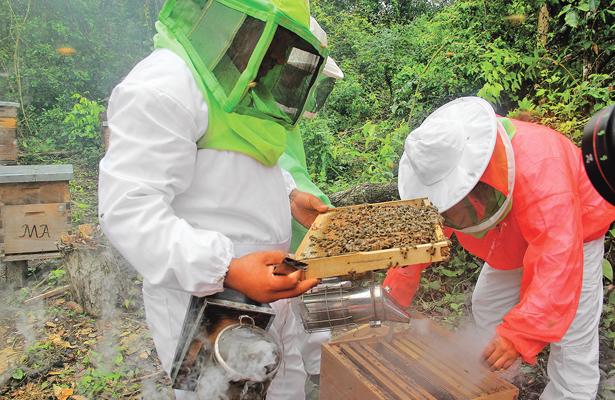 Hidalgo, segundo lugar en producción nacional de miel de calidad