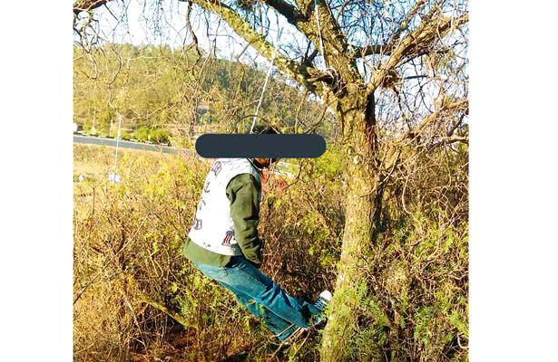 Suicida; amaneció colgado de árbol