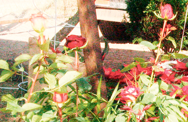 En primavera, aumenta comercialización de flores