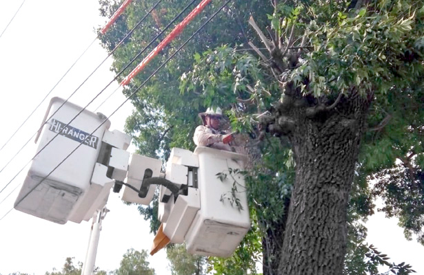 Podan árboles para eliminar contacto con cables de luz
