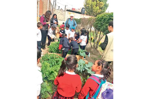 Edifican huertos verdes en escuelas