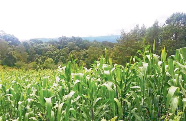 Grandes cultivos rodean al valle