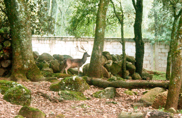 Temazate ha desaparecido del ecosistema de la Sierra