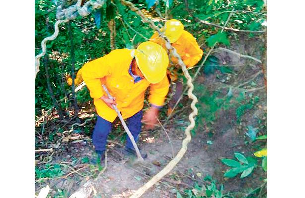 Supervisan zonas boscosas para prevenir plagas