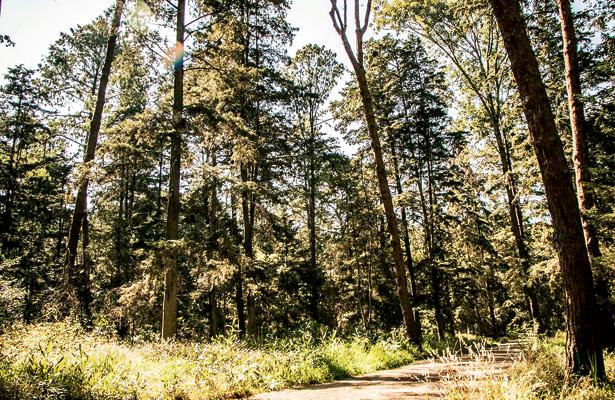Tala clandestina, un problema latente en la Sierra