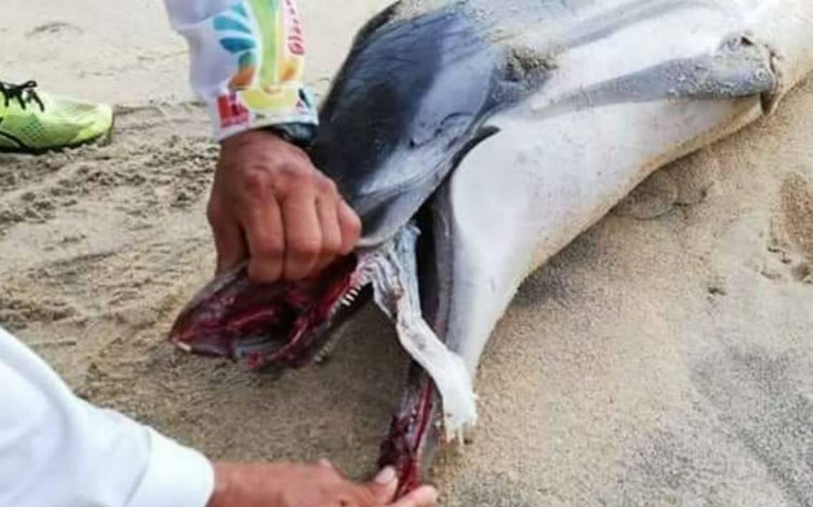 Delfín aparece muerto en playa de Oaxaca, se asfixió con un pañal