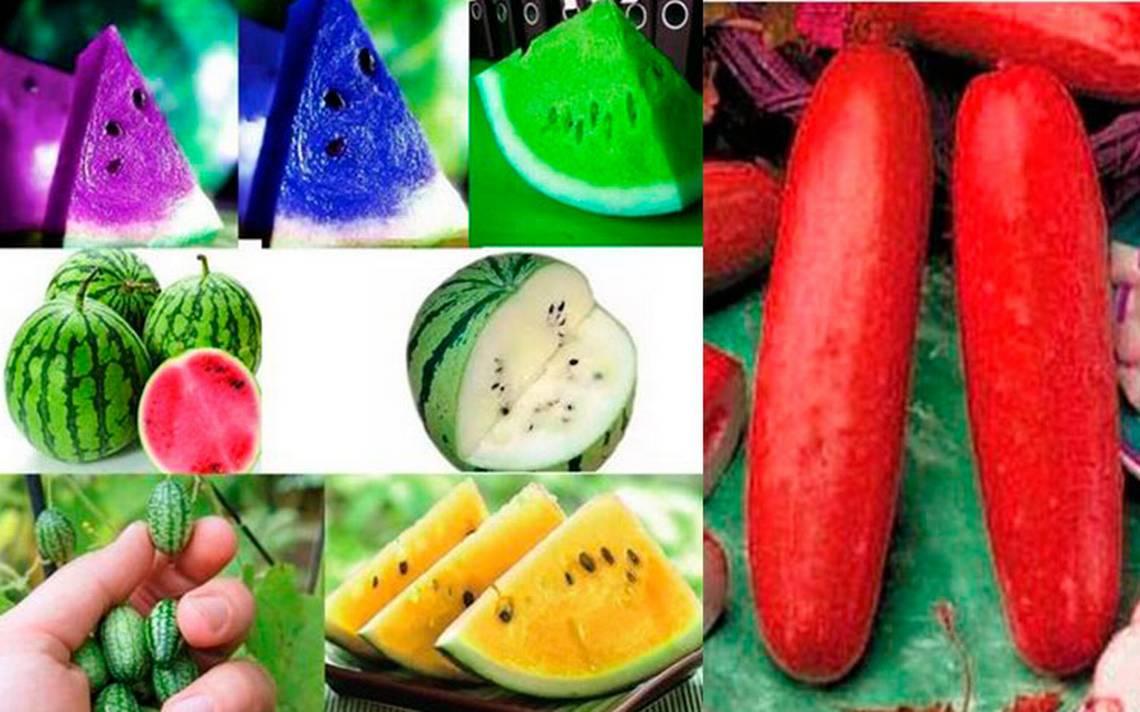 Será melón o sandía… pero con genes modificados