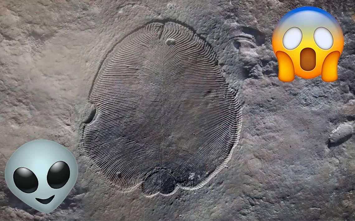 ¿Es un alien? Descubren a Dickinsonia, el primer animal que habitó la tierra