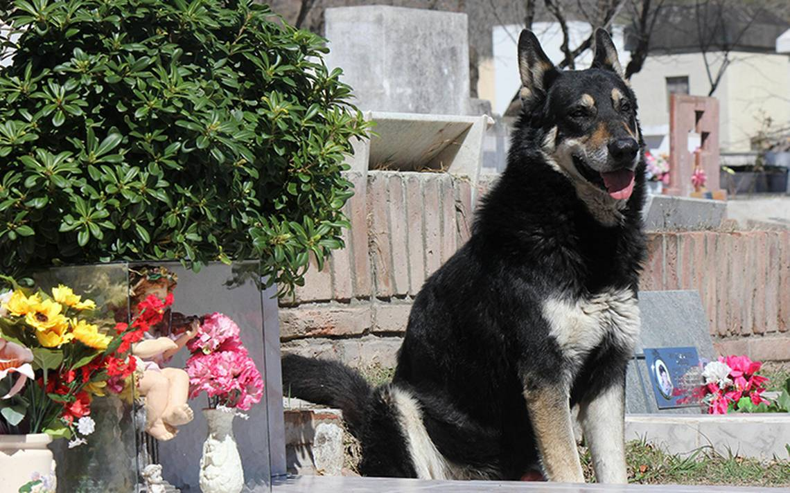 Perrito de Argentina jura un 'siempre a tu lado' en la tumba de su amo