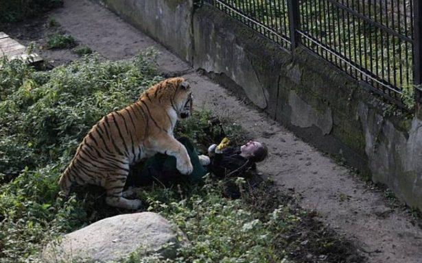 ¡Aterrador! Tigre ataca a su cuidadora para 'defender su territorio'