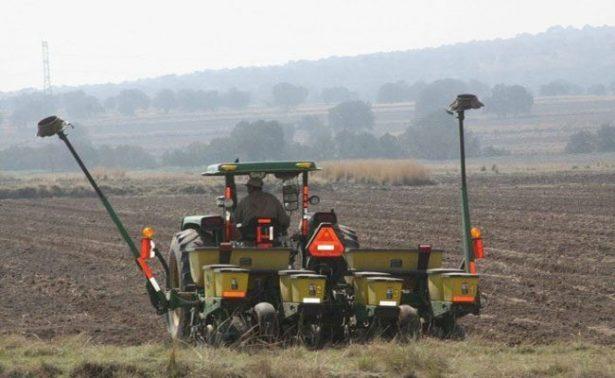 Sin maíz, miles de hectáreas por sequía