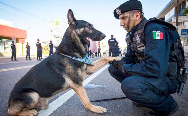 En México ya tampoco es fácil ser perro policía: son amenazados por el narco