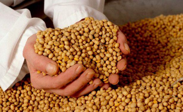 Para depender menos de EU, empresas mexicanas negocian comprar granos a Brasil