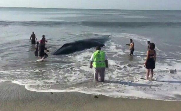 En playas de Oaxaca queda varada una ballena
