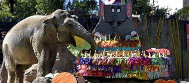 Elefanta Trompita, rescatada de un circo, celebra su cumpleaños 57 en Guatemala