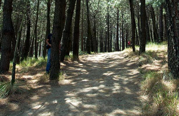 Reforestarán el Parque Centenario
