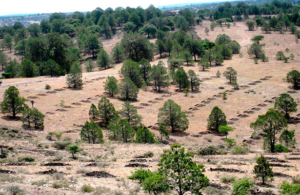 Destinan recursos para ecosistemas forestales
