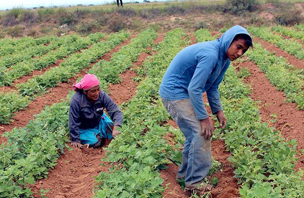 Esperan buena cosecha en nuestro estado
