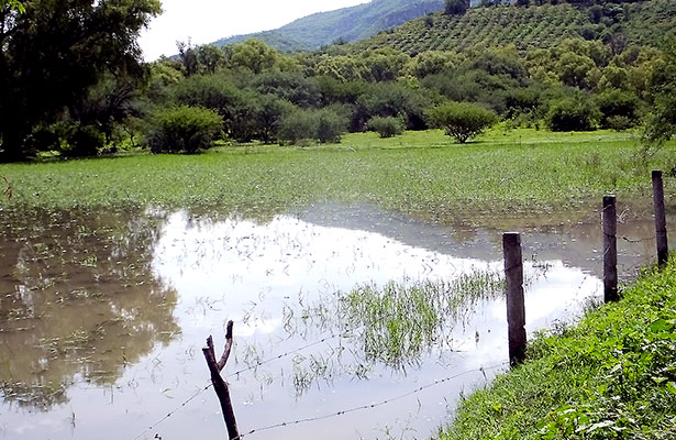 Laguna en Jalpa, propicia para zancudos