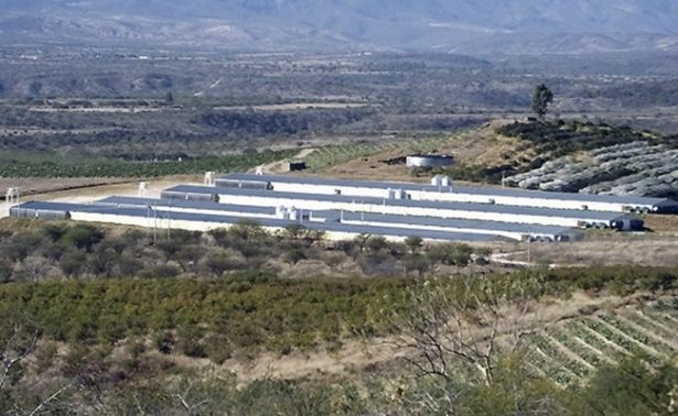 Producción avícola beneficia a Huanusco