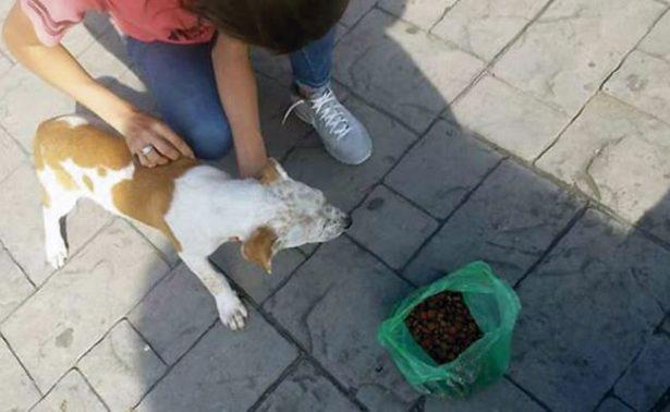 Albergue canino de Jalpa, con apoyo sigue creciendo