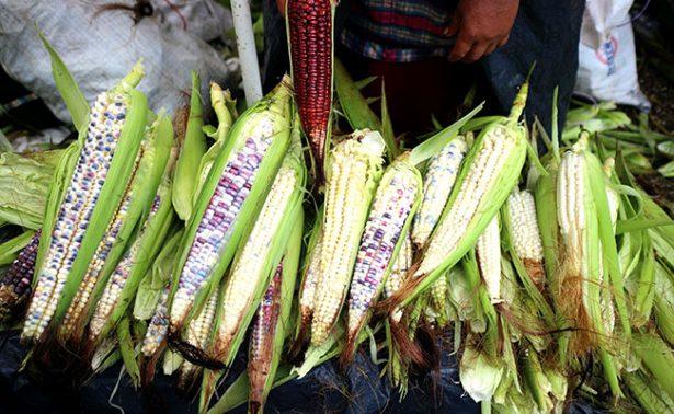 Renegociación del TLC afectaría al sector agropecuario: Sezac