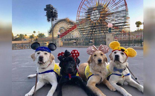 Perritos se van de excursión a Disneyland y ¡las redes mueren de ternura!