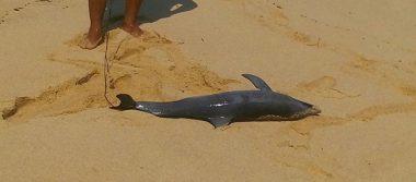 Delfín muere por golpe de una lancha en Oaxaca